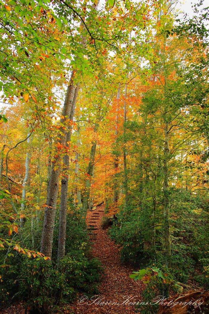 3. York River State Park (Williamsburg)