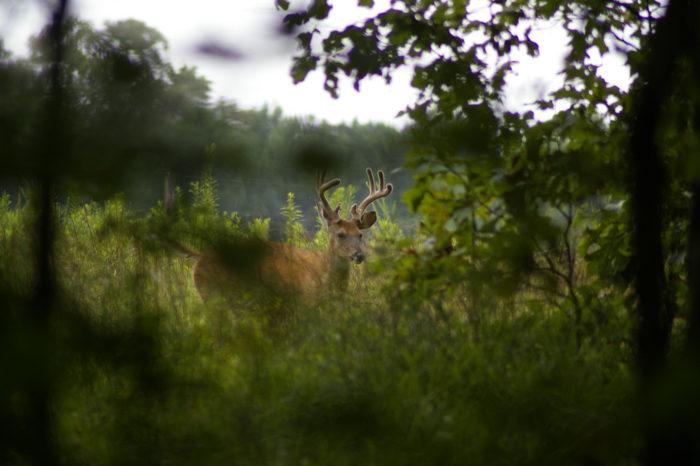 8. Felsenthal National Wildlife Refuge