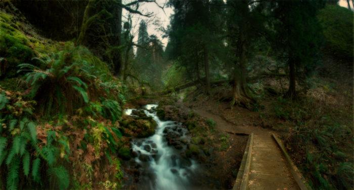 Continue along the Wahkeena Creek through a mesmerizing, emerald green forest.
