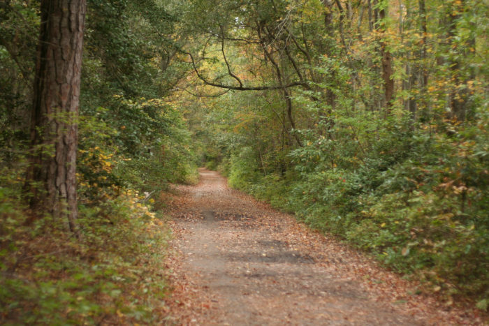 2. Cape Henry Trail (Virginia Beach)