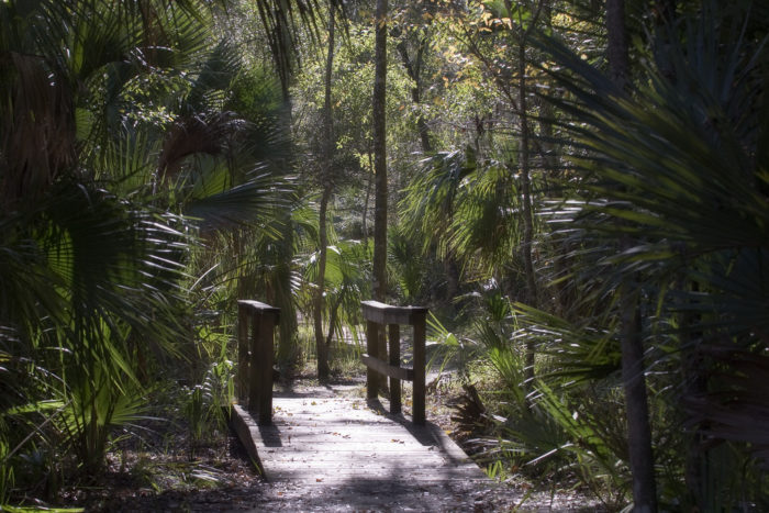 This hike is within the Ocala National Forest in Central Florida, the second largest national forest in the country.