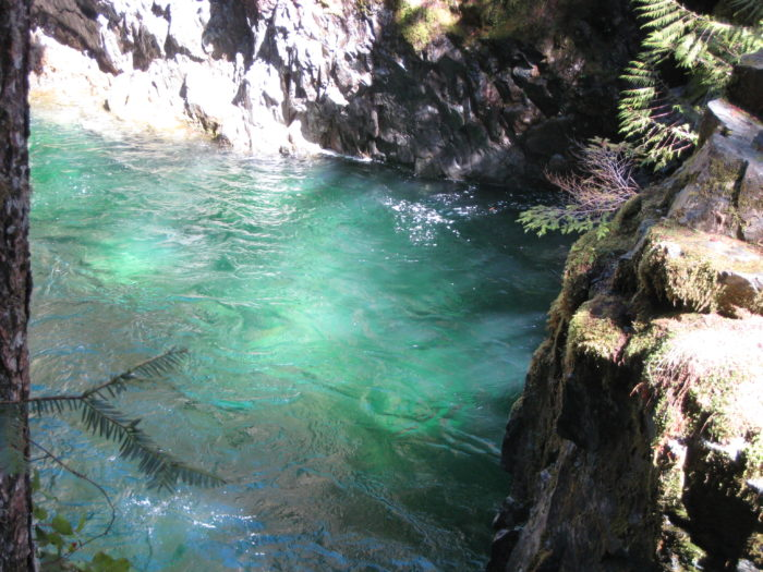 Opal Creek Ancient Forest