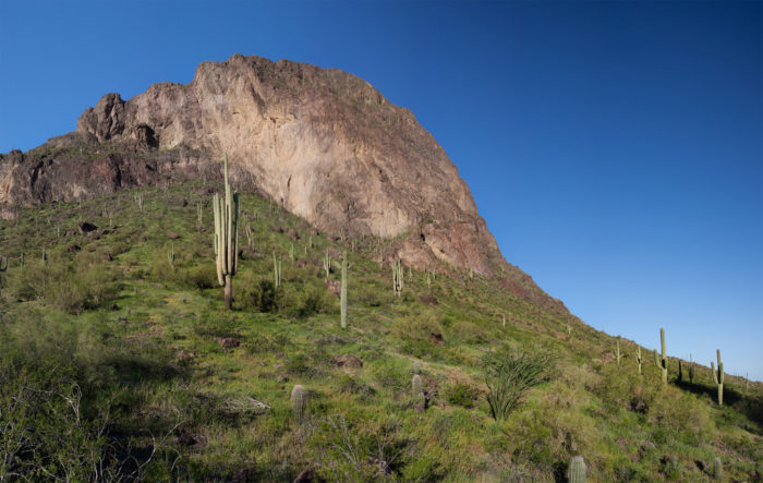 2. Calloway Trail (Picacho Peak State Park)