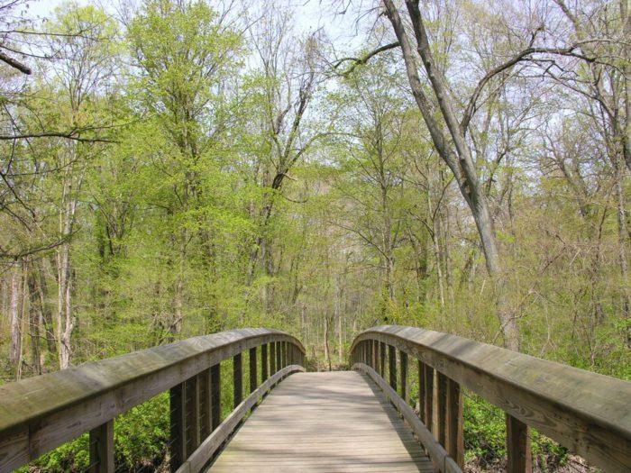 3. Warren Woods Natural Area (Elm Valley Road, Sawyer)
