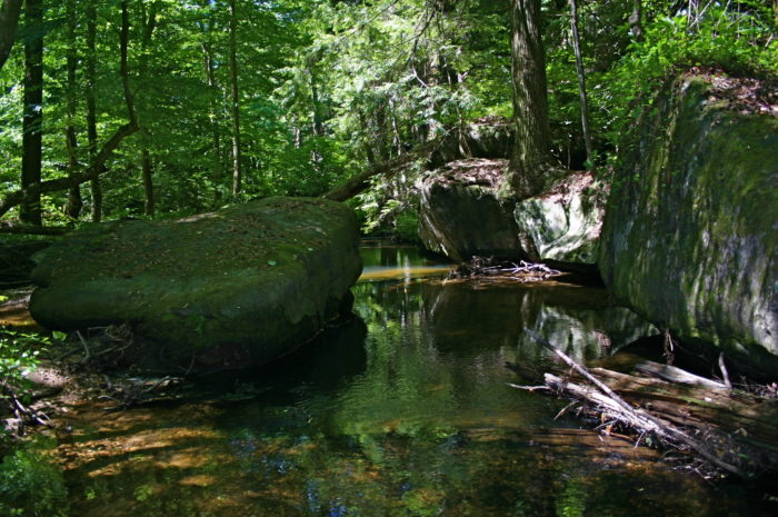 Dismals Canyon A Secret Spot In Alabama Only Locals Know