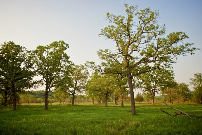 Riverway Campground gives you access to William O'Brien State Park's 1,653 acres of wildlife.