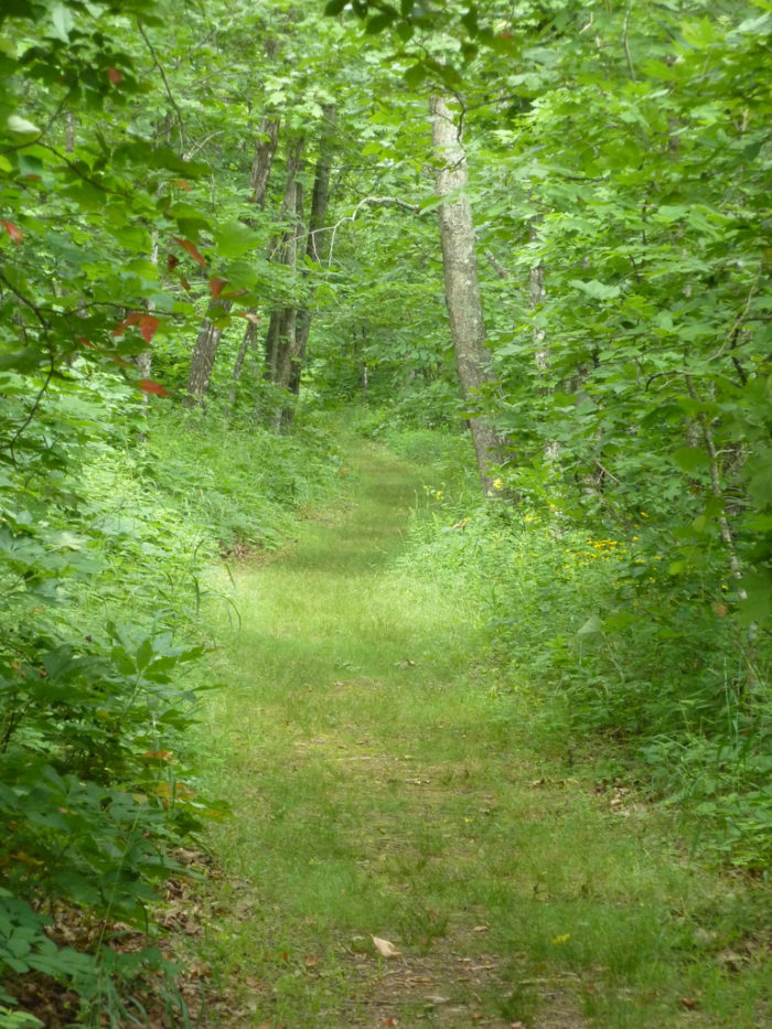 6. Will Apple's Road Trail (Mount Magazine State Park)