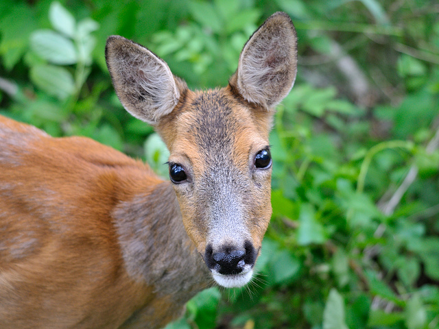 2. Historians suggest the trail was originally outlined by local deer roaming through the area.