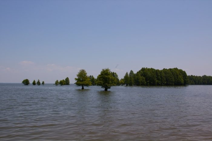 """This resulted in many stumps and trees just under the surface. Some, especially cypress, actually thrive in the lake waters, making this """"inland sea"""" even more stunning."""