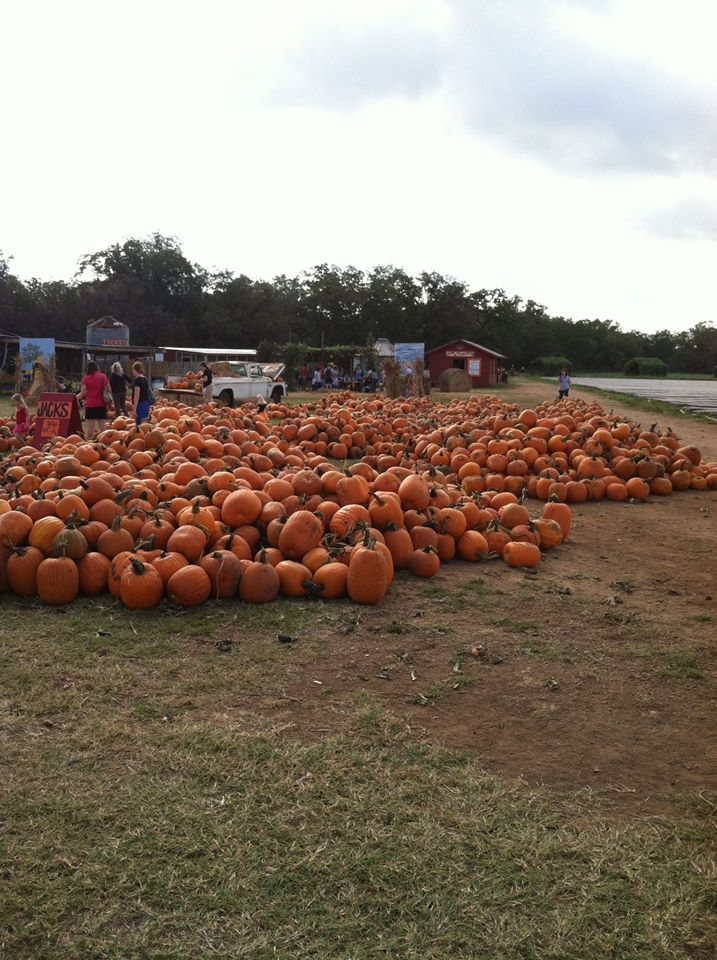 Pumpkin Patch South Austin Texas