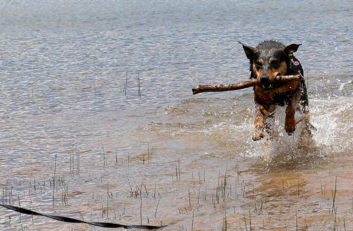 Navajo Lake is the perfect spot for boating, fishing and stick fetching.
