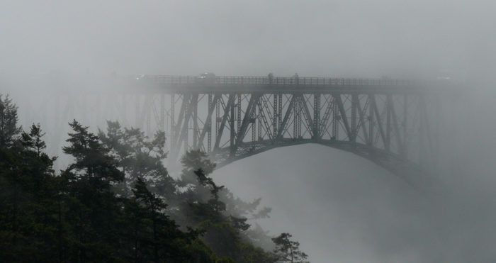3. Washington's fog lends an air of mystery to our surroundings and softens everything in its shroud.