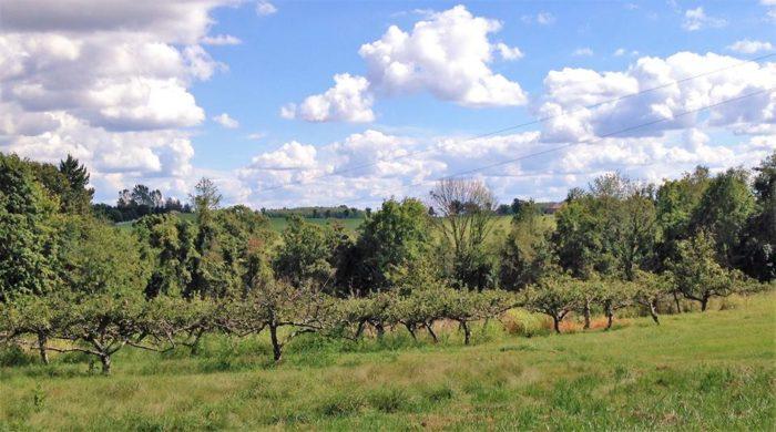 5. Taggart's Orchard – Washington
