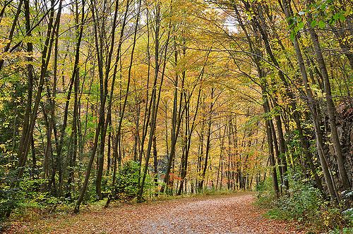 5. Lehigh Gorge State Park