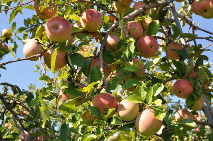 1. Carter Mountain Orchard (Charlottesville)
