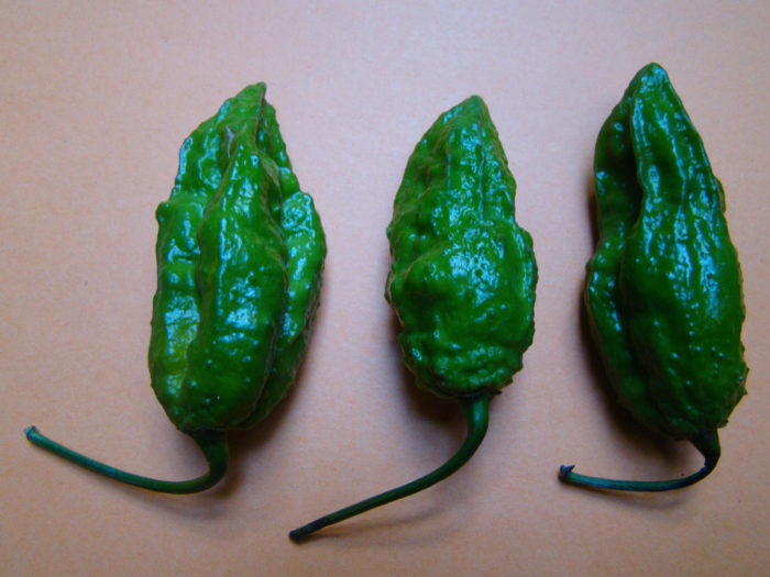 His secret? He crossbred the former hottest pepper in the world, the Ghost Pepper, shown here...