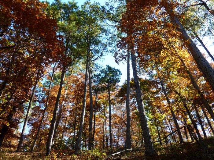 4. Dogwood Trail (Lake Ouachita)