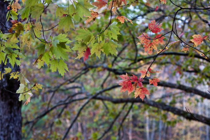 This time of year the trail is full of color explosions as the trees will begin to change colors soon.