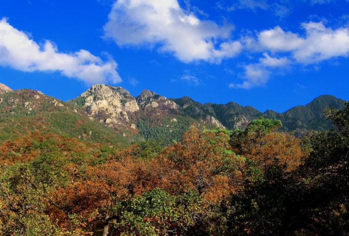 1. Madera Canyon