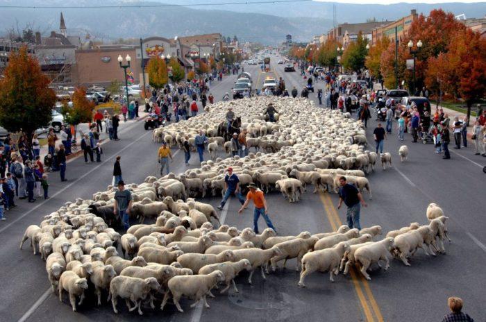 12. Livestock and Heritage Festival, Cedar City