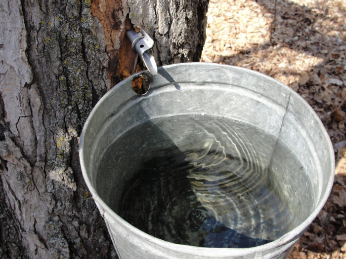 3.  Why is maple syrup so expensive?