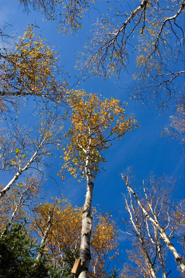 And, as with any hike, don't forget to look up as well as straight ahead. Some of the most beautiful parts of Maine are high above us. Especially during the fall.