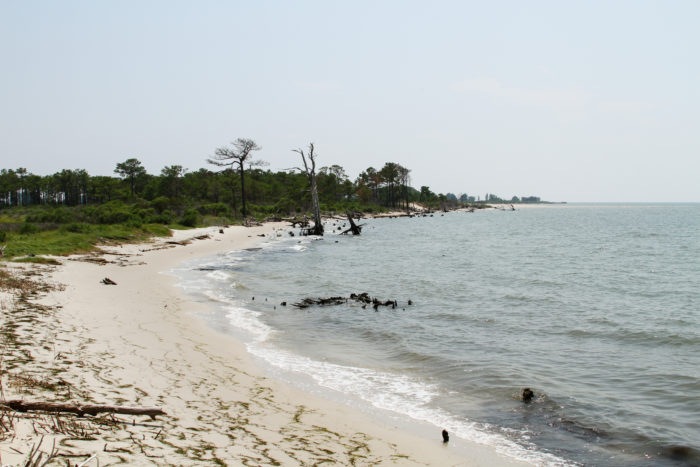 The coast offers sandy beaches, perfect for collecting driftwood.