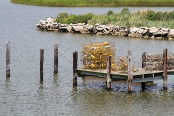 With blue crabs being the treasure of the bay, you'll often find crab docks scattered around the perimeter of the island.