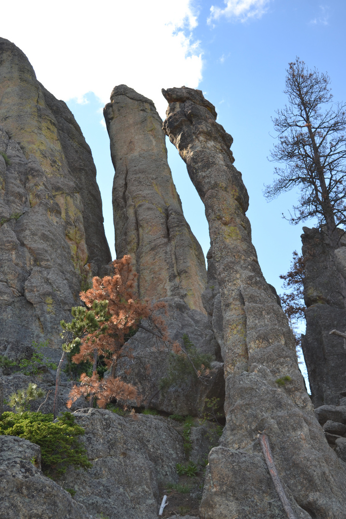 3. The needles of the Needles Highway