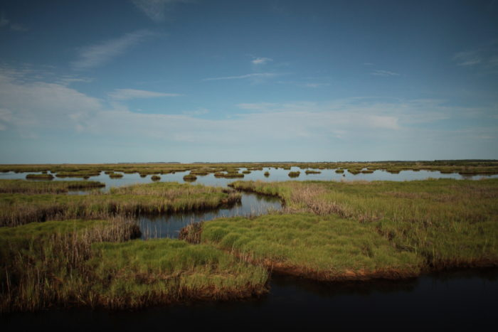 In some spots, wetlands stretch as far as the eye can see. It's a glorious sight and a type of terrain that not many get to witness.