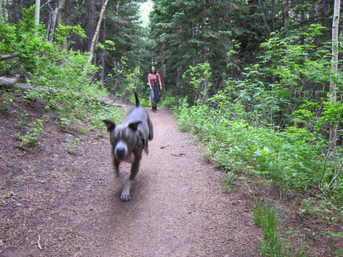 6. Dog Lake, Millcreek Canyon