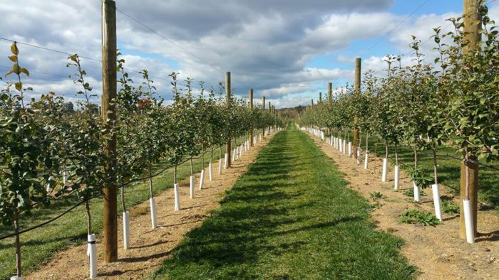 6. Grim's Orchard & Family Farms - Breinigsville