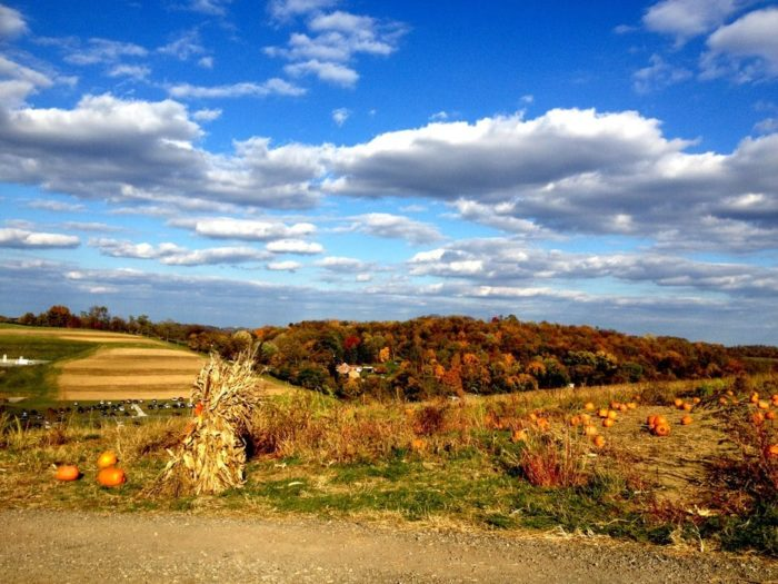 5. Trax Farms – South Hills