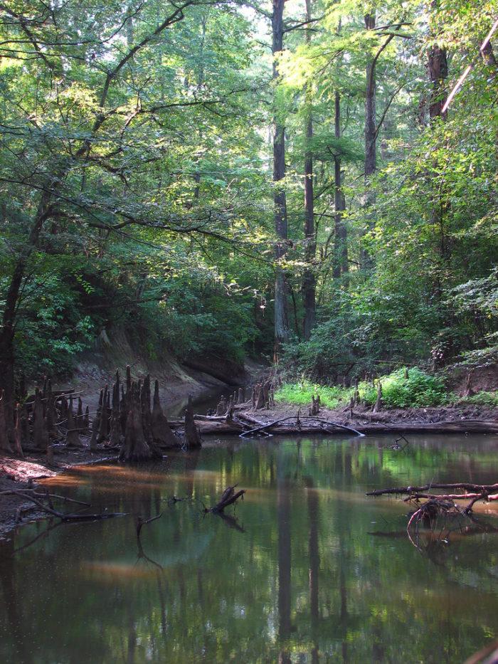 6. Beaver Dam Hiking Trail, Brooksville