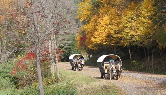 Or, if you prefer something a little different, join other travelers aboard an old-fashioned covered wagon with Ole Covered Wagon Tours. Your journey will take you along the canyon floor with a stop by a shimmering waterfall.