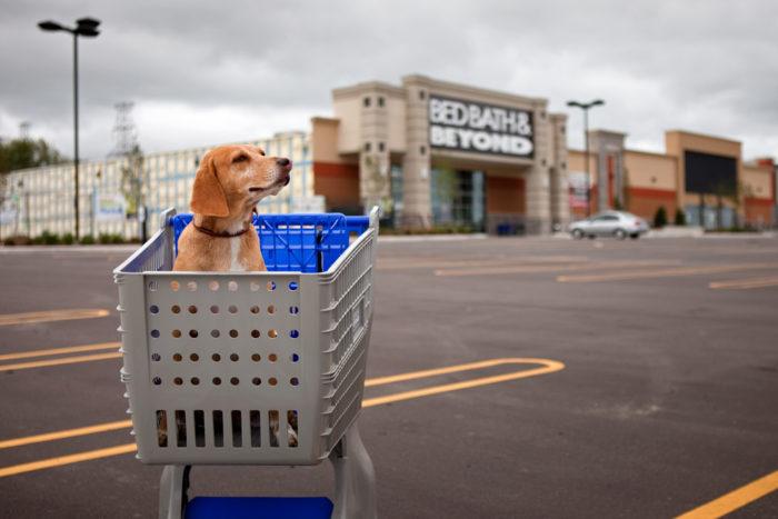 6. You Call Shopping Carts Buggies.