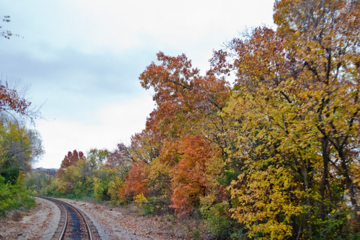 There's nothing quite like all that beautiful foliage bordering the tracks.