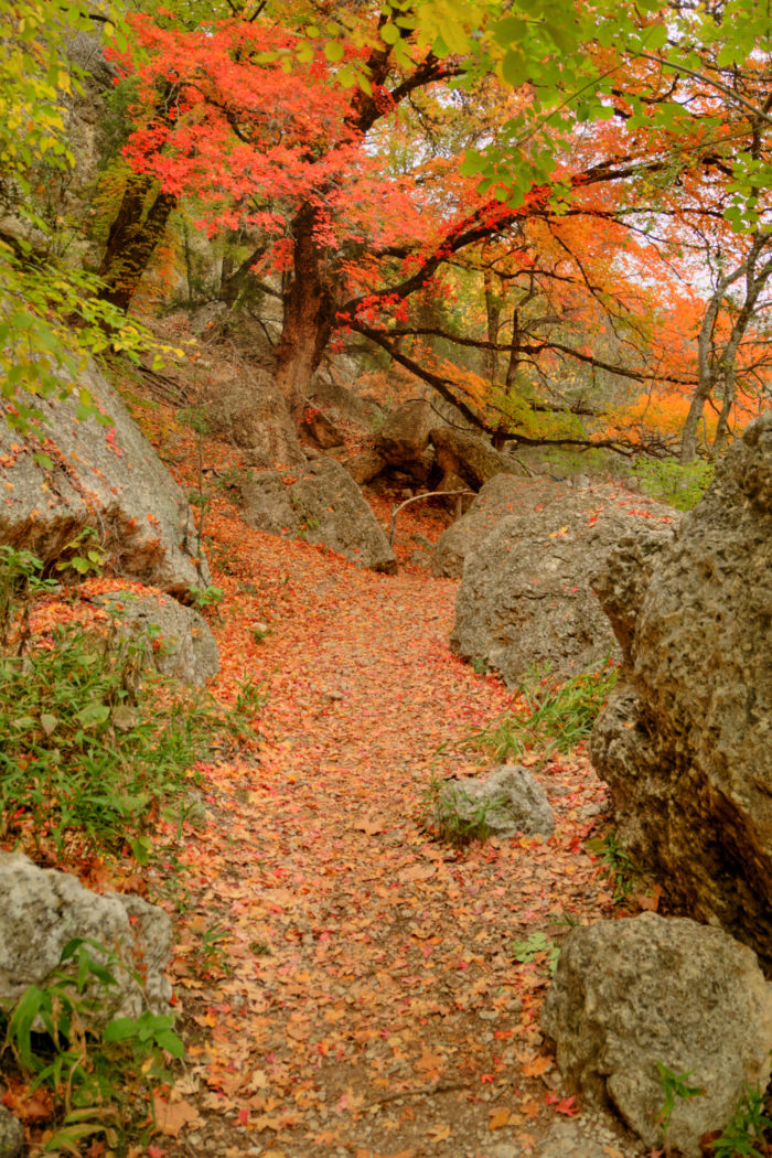 4. Lost Maples State Natural Area (Vanderpool)