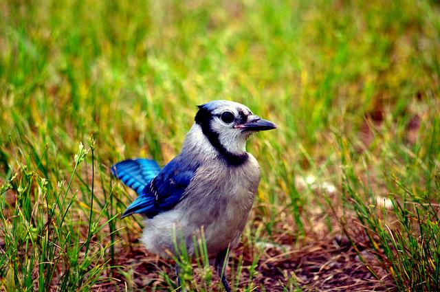 1. Galilee Bird Sanctuary, Narragansett
