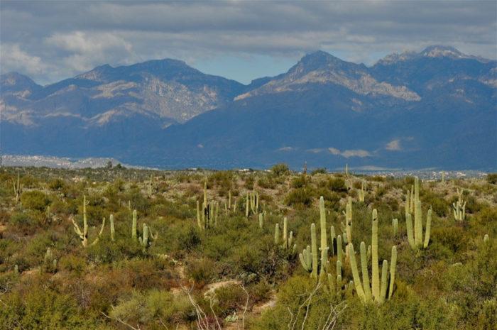 3. Saguaro National Park