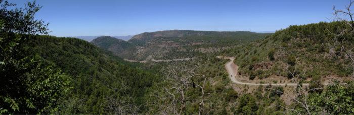 10. Woodchute Trail #102