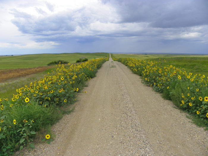 7. The dirt road heading to the Writing Rock State Historic Site in Divide County