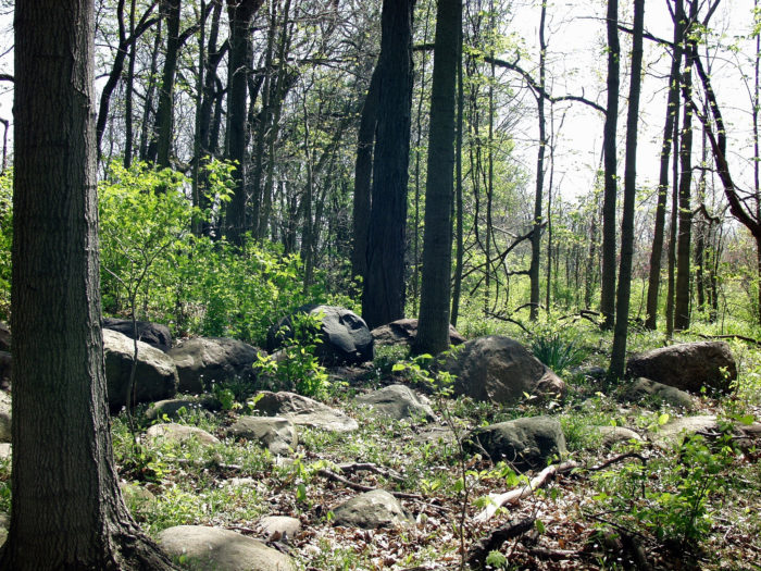 If you prefer natural attractions, Ritchey Woods Nature Preserve looks like a fairy tale come to life. Take the nature trails, go for a bike ride, or just relax with a midday picnic.