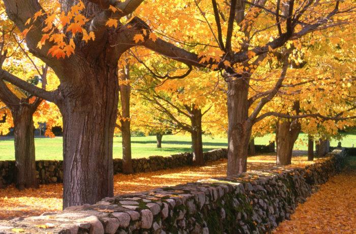 The Best Scenic Massachusetts Fall Foliage Road Trip