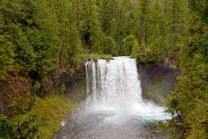 Soon you'll reach the incredible Koosah Falls, which majestically plummets 70 feet.
