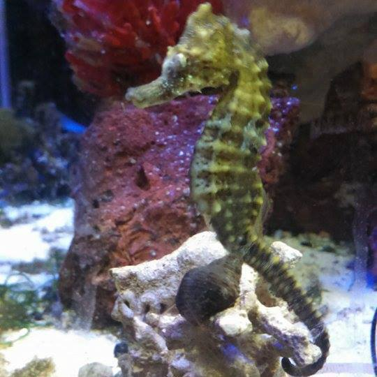 Greet the aquatic residents, including the amicable seahorse, in the restaurant's aquarium.