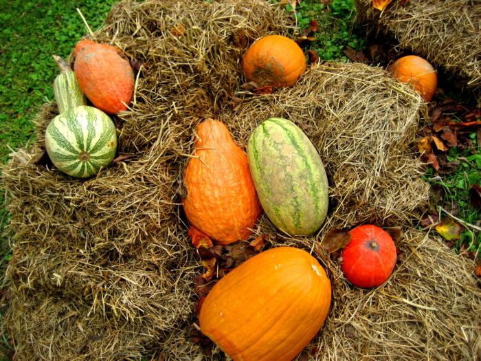 8. Crittenden County Pumpkin Festival