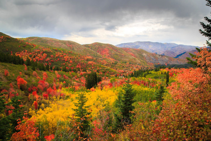 The Alpine Loop takes you about 26 miles through some of Utah's most amazing natural beauty. It's especially beautiful during peak fall foliage.
