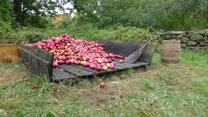 15. Apple Days at Old Sturbridge Village, Sturbridge (Oct 10-12)