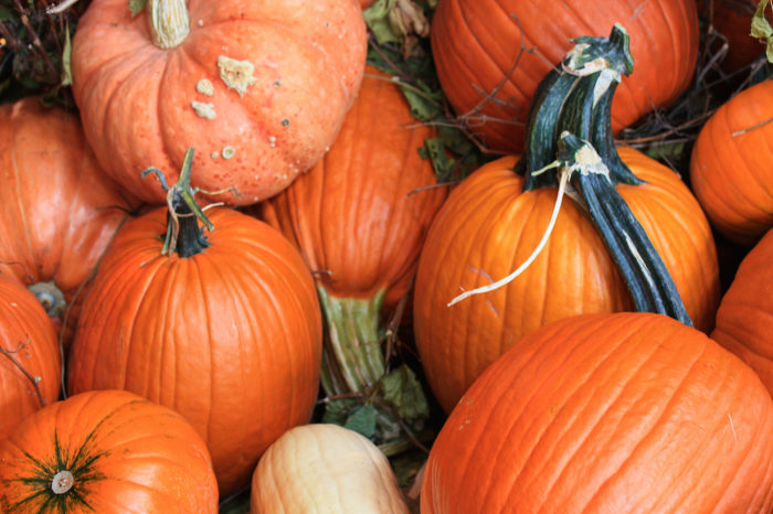 9. Pumpkin Palooza